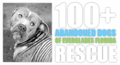 100+ Abandoned Dogs of Everglades Florida, Inc.