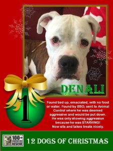 Denali - First Day of Christmas Promo