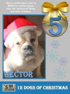 Hector -Fifth-Day-of-Christmas-Promo