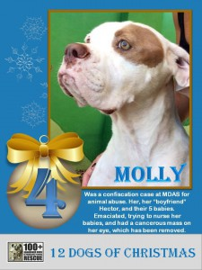 Molly-Fourth-Day-of-Christmas-Promo