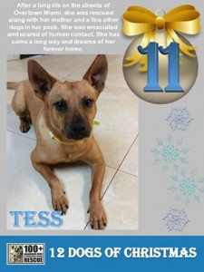 Tess-12-Days-of-Christmas-Promo