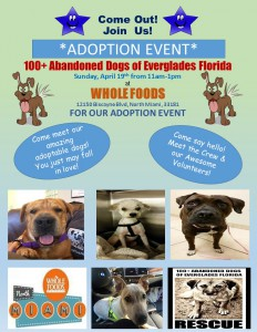 Adoption Event Whole Foods 4.19.15