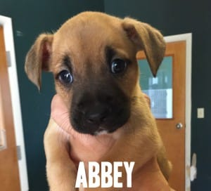 Abbey with name