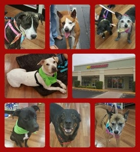 Dogs Pet Supermarket event 8.01.15