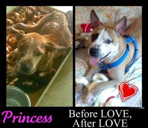 Princess before and after