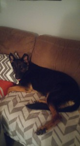 Xena adopted2