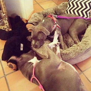 Ivy Adopted