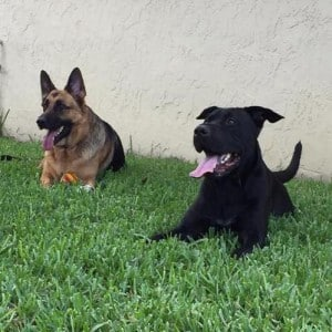 Cooper and sibling Bailey