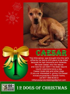 Caesar 12 days of christmas 2016