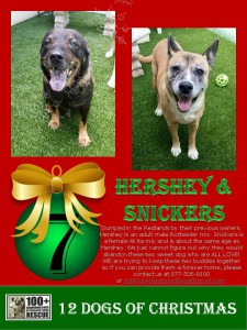 Hershey and Snickers Christmas