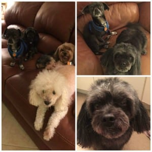 Toby adopted Collage