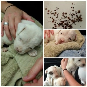 New Puppies Collage