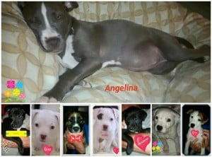 Angelina and Puppies for adoption
