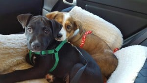 Mocha and Palm adopted together1