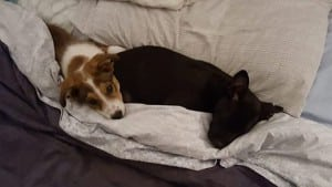 Mocha and Palm adopted together1...