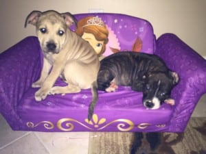 Freya and Atticus adopted1