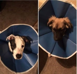 patch and obby adopted together3