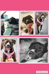 Lilly Collage1
