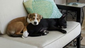 Mocha and Palm adopted together2