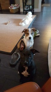 Mocha and Palm adopted together3