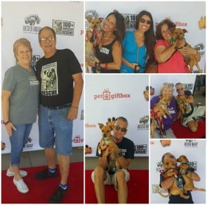 Rescue Dogs The Movie Collage2