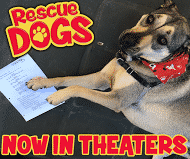 Rescue dogs The Movie29