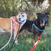 Hershey and Snickers3