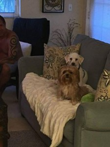 Samson and delilah adopted