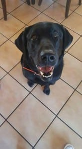 Chester now Remi - big rescue Jan 2014