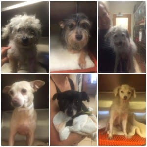 Hoarding Rescue Collage