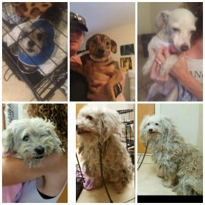 Hoarding Rescue Collage1