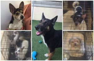 Hoarding Rescue Collage2