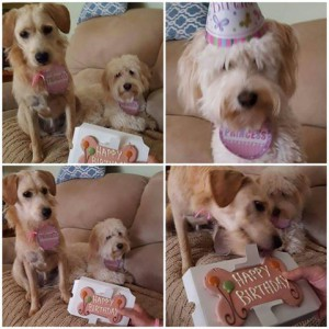 Romi and Riley First Birthday