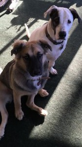 patch and obby adopted 6