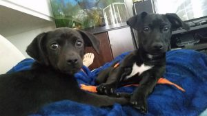 Jan and Kenickie adopted together7