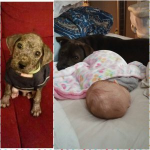 Baby adopted1