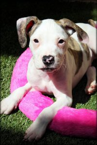 Dophin Puppies - Griese M4