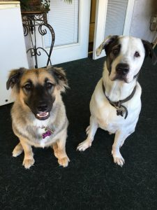 patch and obby adopted 7