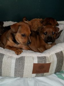 Amtrack Train Station puppies3