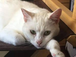 Ashley adopted now Snowy 1