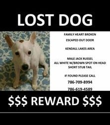Courtesey Post - Lost Dog 10.21.16