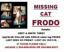 Courtesy Post - cat missing - 10.29.16