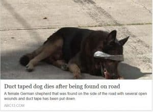 Duct taped dog dies after being found on road...