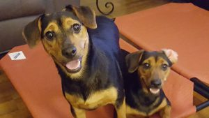 Shelby and Spencer adopted1