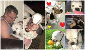 Rosie adopted22 collage