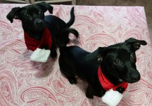 Jan and Kenickie adopted together16