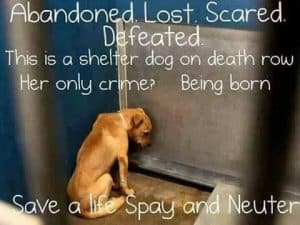 Spay and Neuater is so important