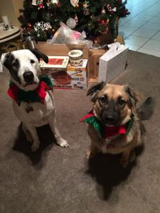 patch and obby adopted together6