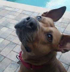 Cupcake – we cannot figure out why this sweet girl hasn't been adopted yet.