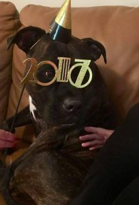 Denver Adopted4 New Years Eve 2017